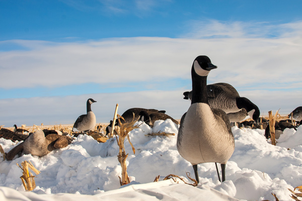 Best New Waterfowl Decoys for 2015