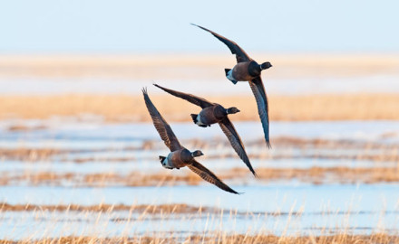If you're considering a guided waterfowl hunt, consider these affordable options!