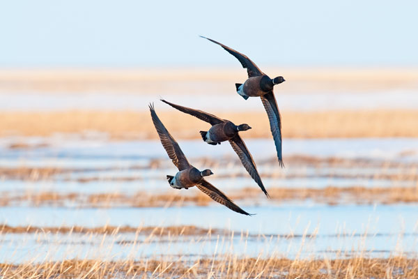 9 Affordable Waterfowl Hunts
