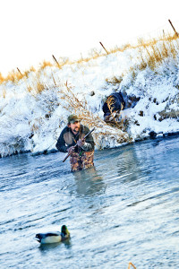 Tactics for Hunting Mallards During Winter