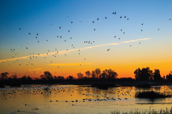 Big water duck hunting tactics