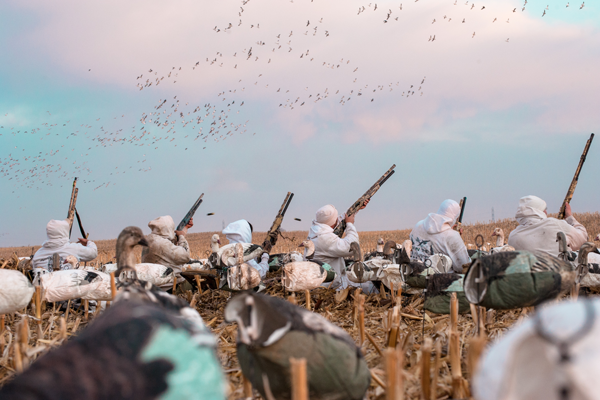 Snow Goose Hunting Shooting Lanes