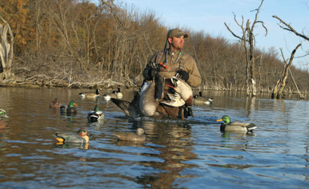 While there are no absolute guarantees when it comes to ducks and decoy spreads, it helps to have