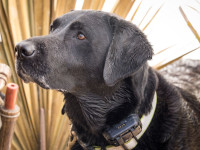 Tracking dogs with a GPS collar