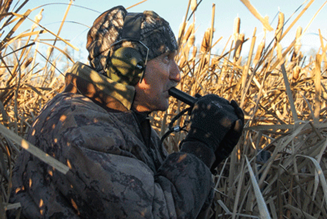 Calling Ducks Into the Blind