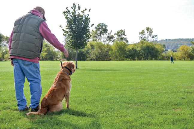 Having Fun with Dog Training Drills