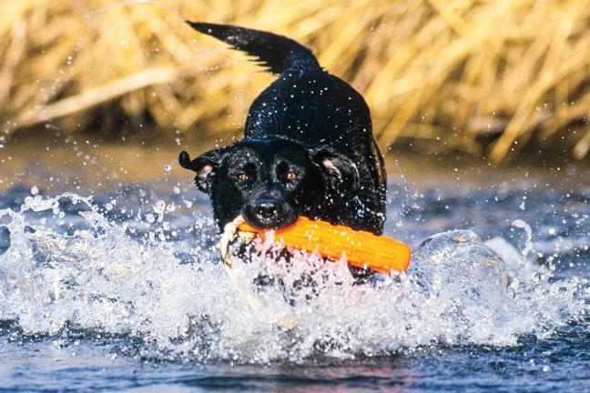 Dog Training Drills in Water