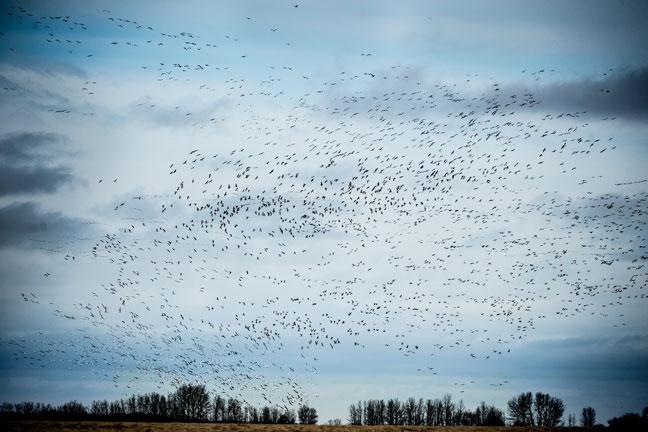 Duck Hunting Canada