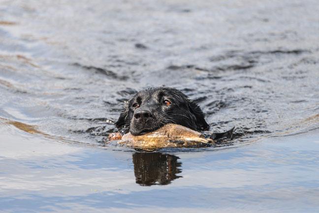 Taking Breaking While Dog Training
