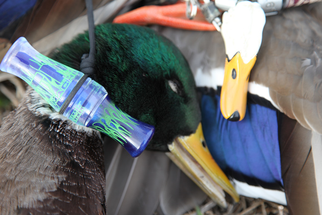 Best Mallard Hunting Locations
