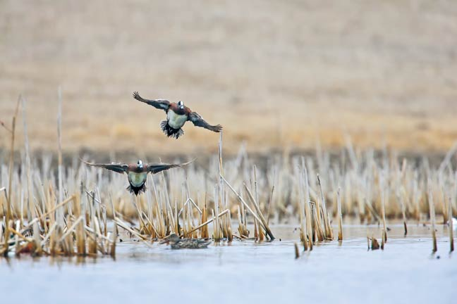 public-land-duck-hunting