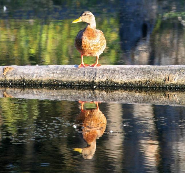 early-season-duck-hunt