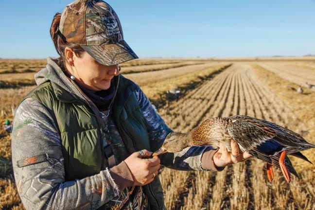 early-season-duck-hunting