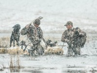 deadly-duck-hunts