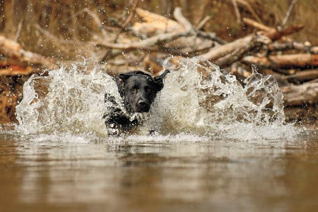 finishing-shots-with-your-dog