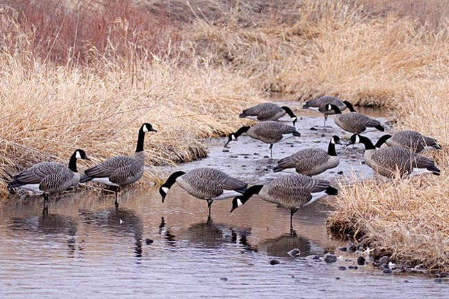 holiday-gifts-for-the-waterfowler