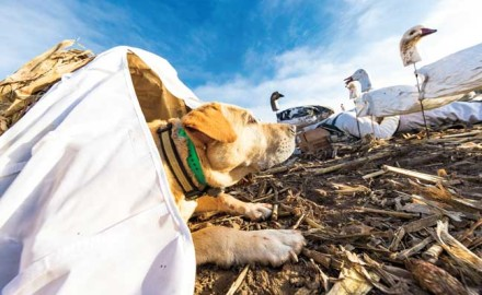 Capturing the beauty of retrievers doing what they do best naturally is an art form. These dogs