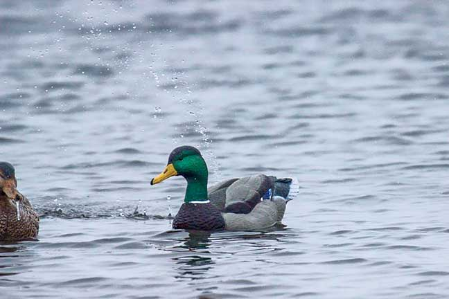 motion_decoys_2