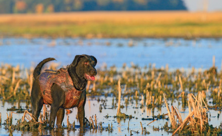 Caring for your dog's feet is a top priority, especially if you own a field dog that may cover