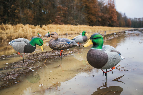 Photo-1-Mallard-Mashup-WIFP-171000-GU-015