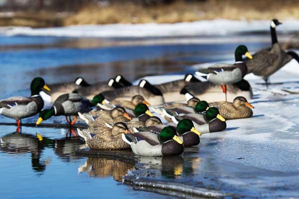 Photo-5-Dakota-Flocked-Resters