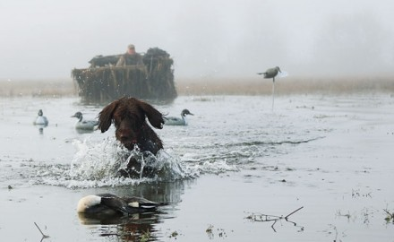 There are many fine places to hunt waterfowl throughout the Pacific Northwest. Here are a few