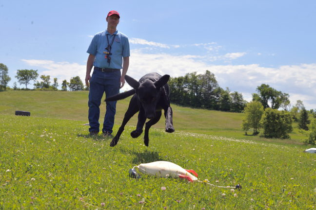 Does Your Duck Dog Need A Pro Trainer's Help?