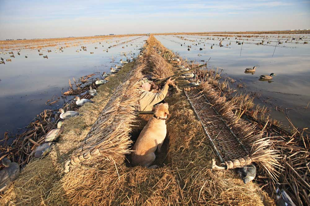 //www.wildfowlmag.com/files/hot-new-waterfowl-blinds-for-2014/gibson_duckblind.jpg