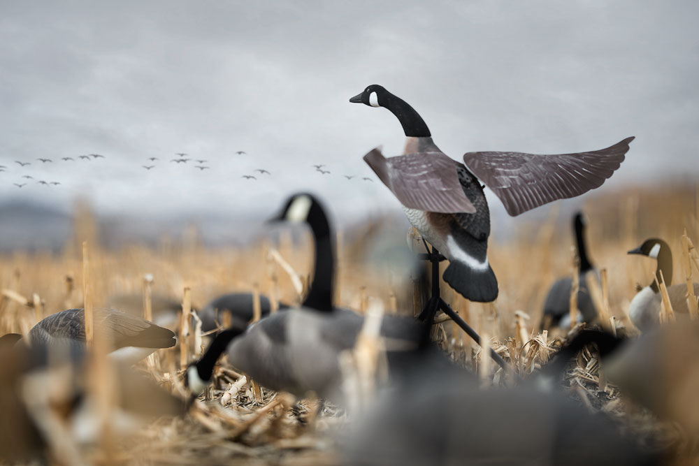 //www.wildfowlmag.com/files/the-best-products-for-waterfowlers-in-2014/lucky-duck-3_1.jpg