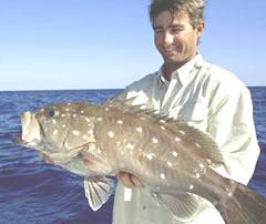 Deep Drop Rig Mustad 12//0 Black Nickel Hooks Grouper Tilefish Queen Snapper