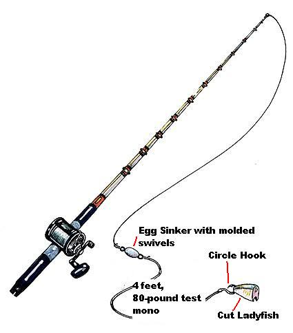Grouper bottom fishing rigs and baits from the pros for Bottom fishing rods