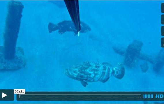 Jupiter Inlet Spearfishing Florida Sportsman