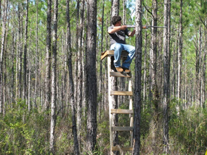 TreeStand_IMAFS