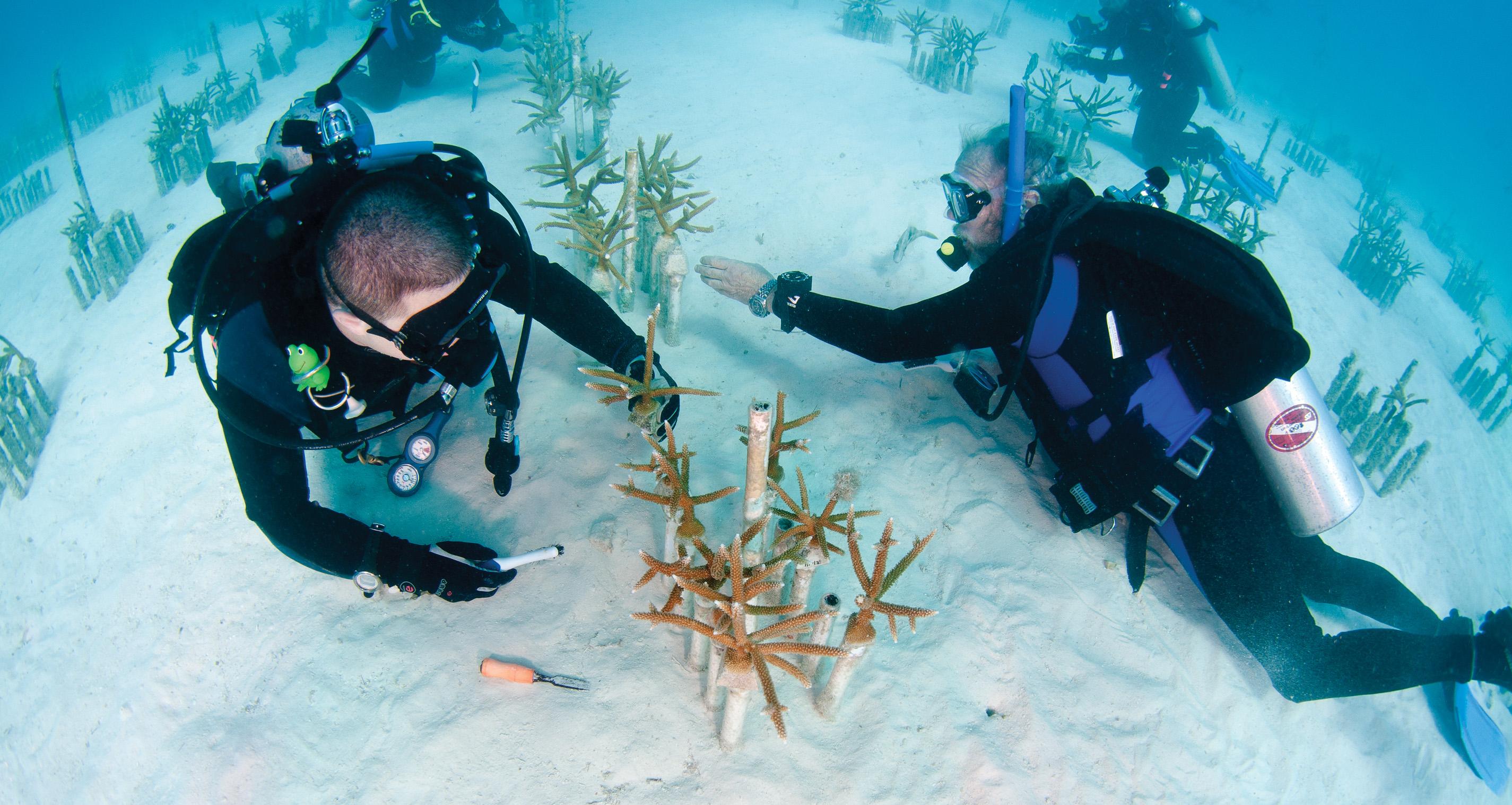 Florida Keys C Expert Named Cnn Hero