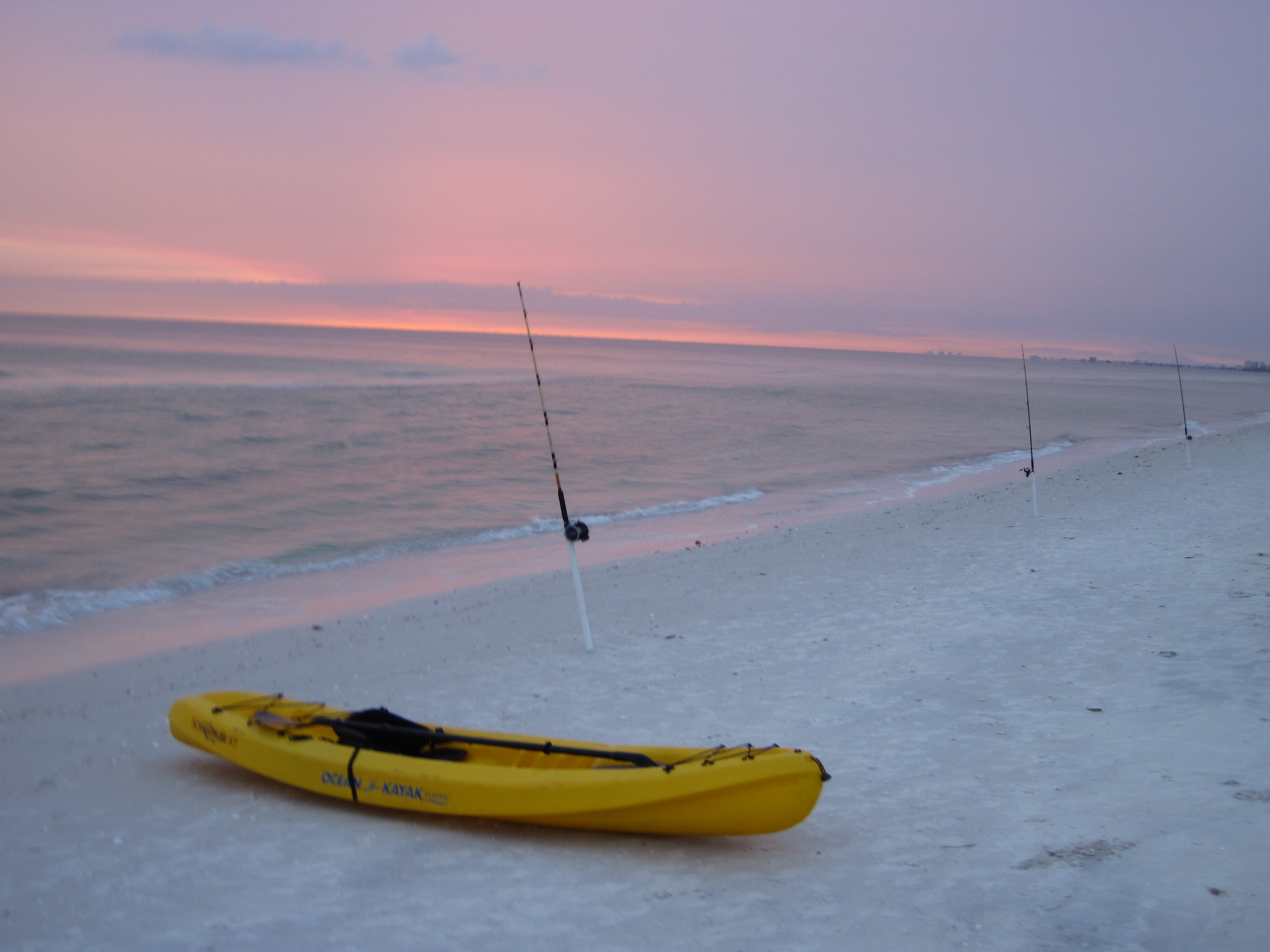 Every Year From May To September The Forum Comes Alive With Beach Shark Fishing Reports Naples Sanibel And Incredible Pictures Go Along