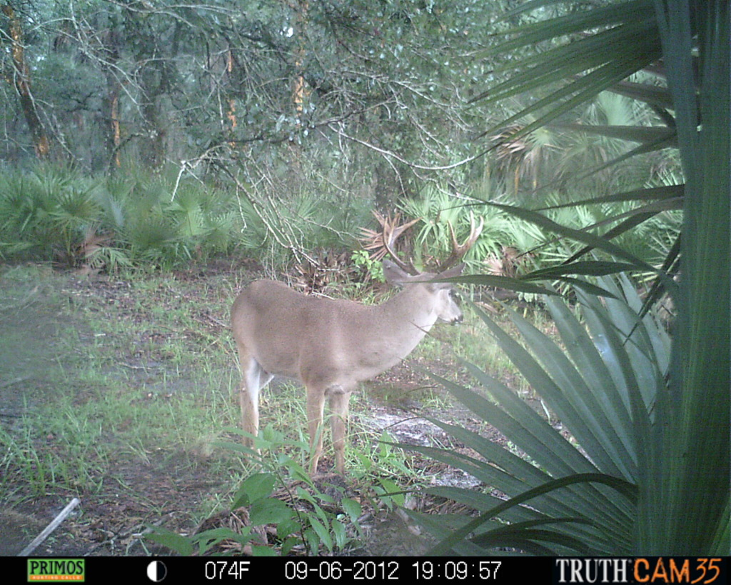 Pull Back on a String; Florida Hunting Season is Here!