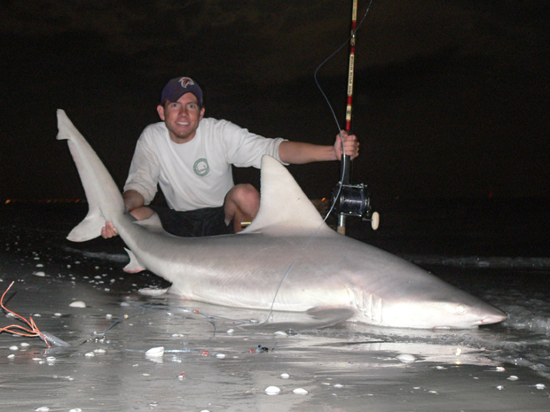 Sandbar Shark Hooked From The Beach Species Is Protected Like Many Large Sharkust Be Released