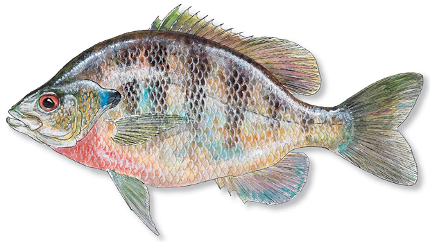 how to cook blue fish recipes