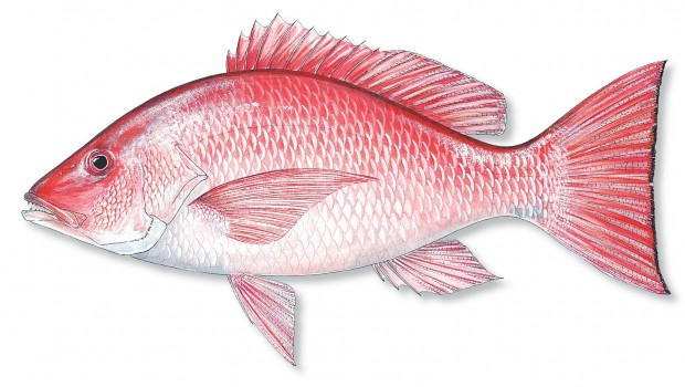 How to catch red snapper florida sportsman for Red snapper fishing