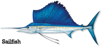 Sailfish Info