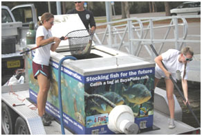 Photo of FWC biologists stocking bass
