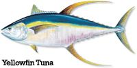 Yellowfin Tuna Info