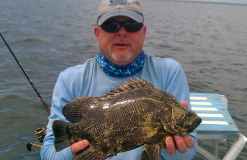 How to catch tripletail florida sportsman for Triple tail fish