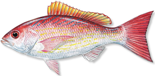 How to catch vermilion snapper florida sportsman for How much is a saltwater fishing license in florida