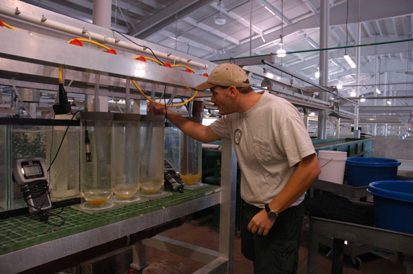 Biologist in fish hatchery