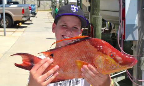 Recreational harvest of hogfish in south atlantic waters for Atlantic game fish