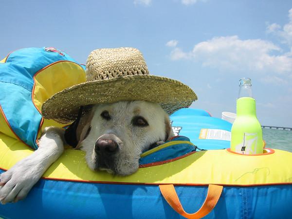 West Marine Dog Days of Summer Social Media Contest - Florida Sportsman 8465686f61f