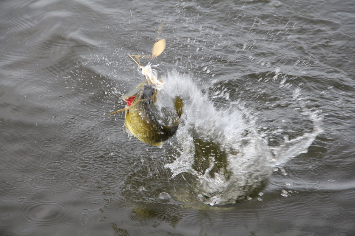 Fishing a spinnerbait early florida sportsman for Spinnerbait bass fishing