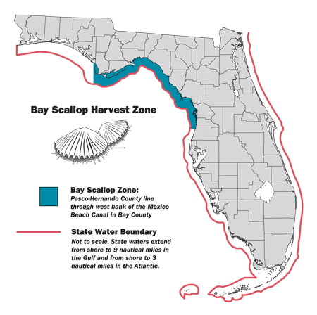 Dive in for scallops florida sportsman for Florida one day fishing license