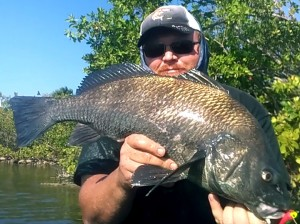 Flats Fishing Black Drum